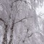 Berk met sneeuw