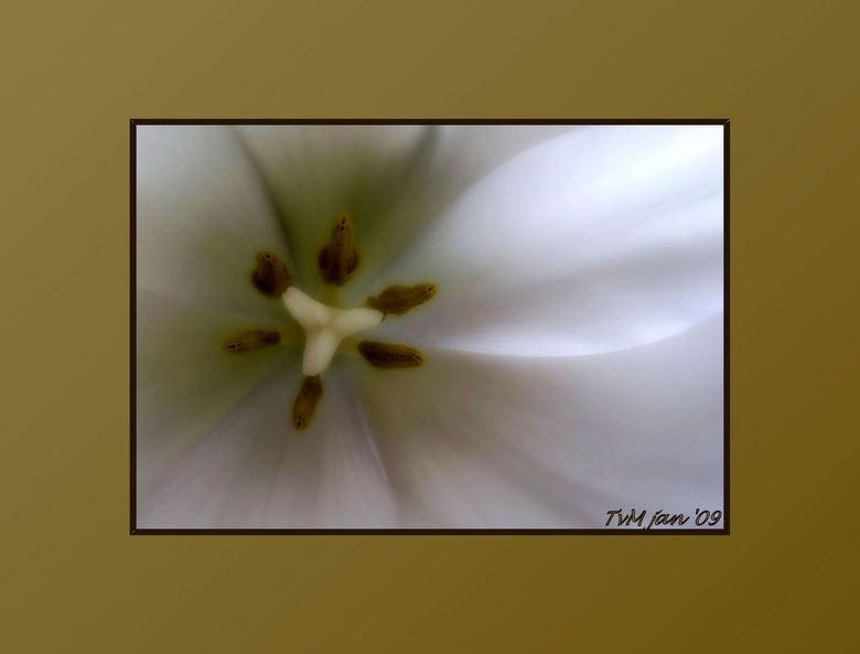 softly 2 - Nog een keer het hart van de tulp maar dan minder heftig bewerkt<br />