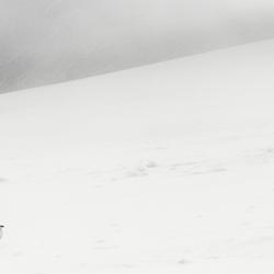 Sneeuwhoen Glencoe Mountain