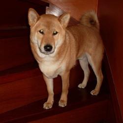 Taiko staat graag op de trap.
