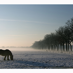 Brabants Winterlandschap