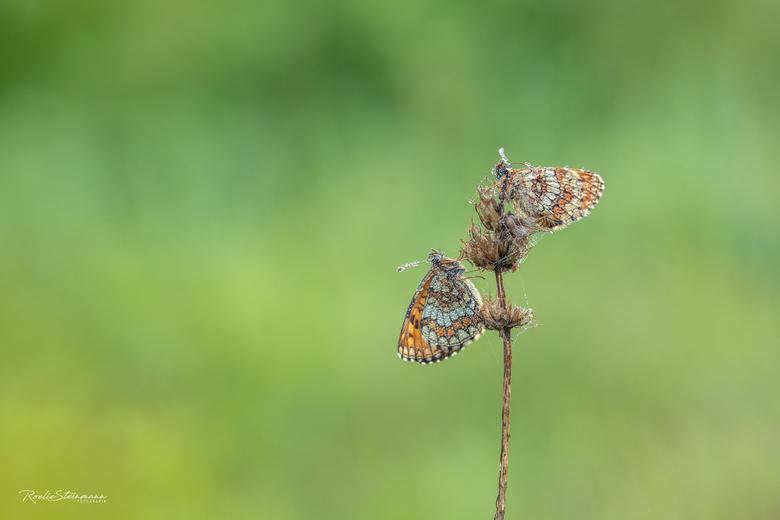 Two of a kind - De bosparelmoervlinder, gefotografeerd afgelopen weekend tijdens een hele leuke en gezellige workshop die ik samen met Lia heb gevolgd