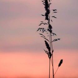 Zonsondergang met een pluim