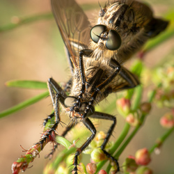 Insectenintimiteit