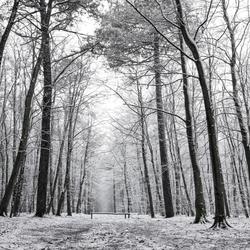 Sneeuw in het bos op Texel.