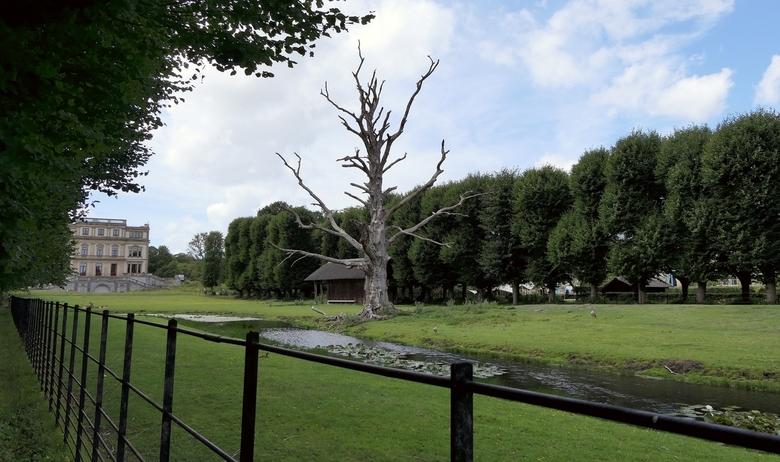 Beroemde dode boom - Deze dode beuk staat hier al jaren. In het begin donkerbruin, daarna zwart en nu zilverkleurig. Ik ben benieuwd hoe lang de boom