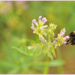 het bloemetje en het bijtje