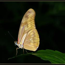 Vlinder op blad!