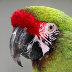 PapagaaiHoenderdaell 550D 031.JPG