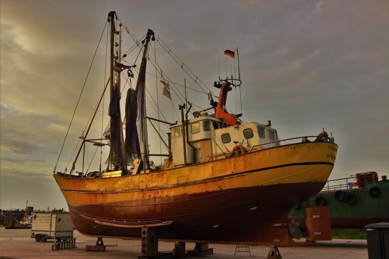 Visarend Greetsiel - Visarend Greetsiel in de haven van Lauwersoog.