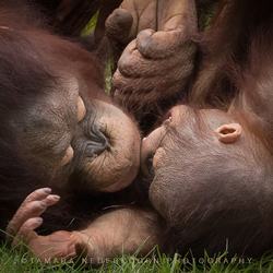 Kiss from mom