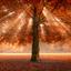 Autumonous Tree