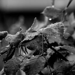 Raindrops ZW 2