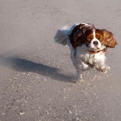 Hollen op het strand