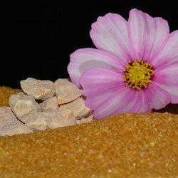 Flower on the Rocks.
