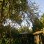 Een oude vlier in onze tuin