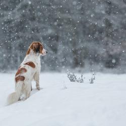 Het sneeuwt