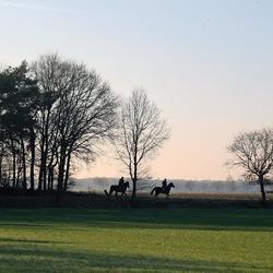 Paarden in het weiland