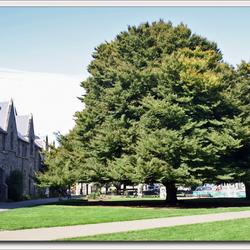 Christchurch, Nieuw Zeeland 5