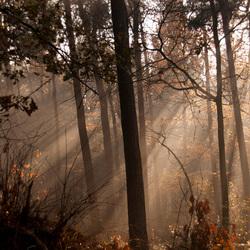 Forrest lightbeams
