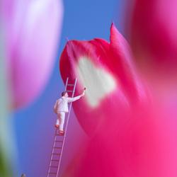 de voorjaarsschilder....