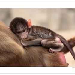 Little Monkey *
