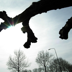 boom midlaren