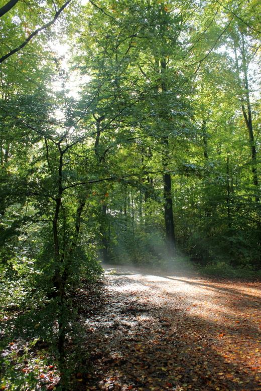 Herfstlicht - Herfstlicht in het Amsterdamse Bos. Een stille sprookjesachtige plek om even helemaal weg te dromen....