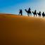 kamelen op zandduin