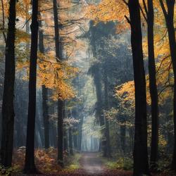 Foliage in Fall.
