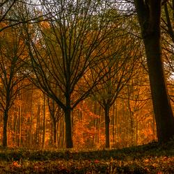Orange woods
