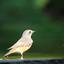 Welke vogel is dit?