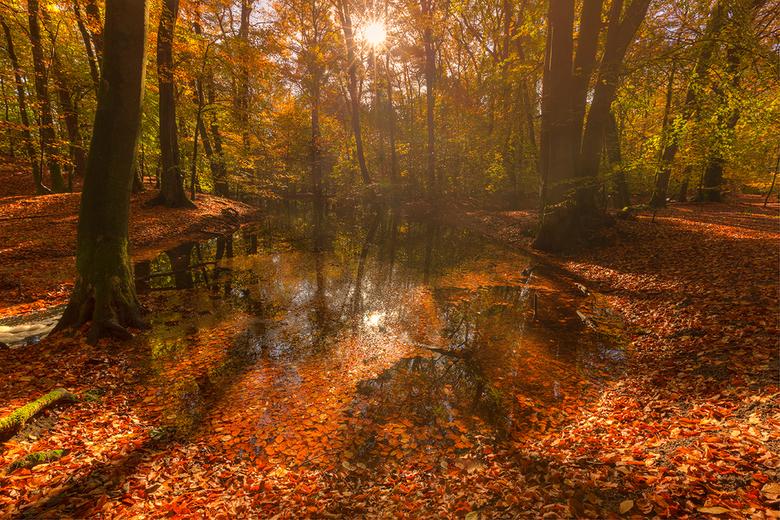 Herfst in Leuvenum