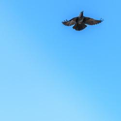 Kauw vs Blauwe lucht