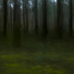 magisch bos .1