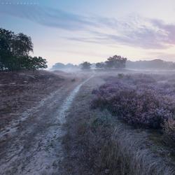 Path to Dawn