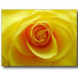 3-luik roos