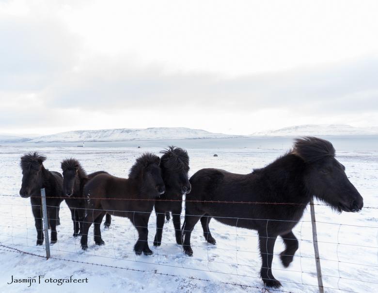 IJslanders - Best een uitdaging om zwart zwart te laten blijven en wit wit.