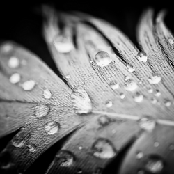 Drops on feather