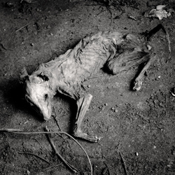 abandoned dog