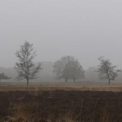 In mist gehuld