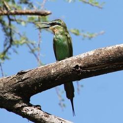 Prachtige vogel in boom
