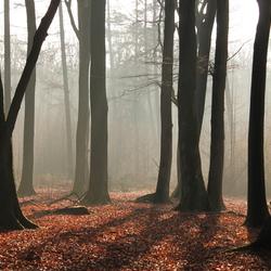 Ochtend in het bos