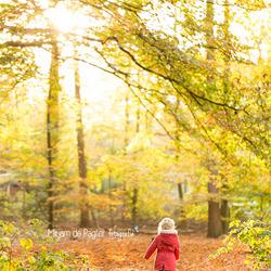 Peuter in het herfstbos | Tegenlicht