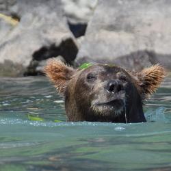 vissen, spelen....zwemmen