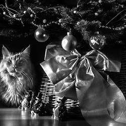 Bram onder de kerstboom