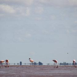 Betsiboka delta