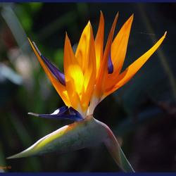 Papagaai bloem