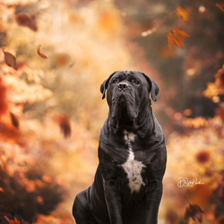 - Rufus -