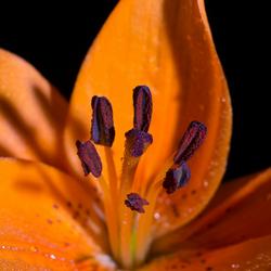 patrickS bloem1-1.jpg
